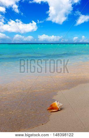 Seashell on beach and sea wave. Sommer meer Landschaft.