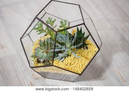 Florarium Glass vase with succulent plant. Miniature cactus succulent plant in a glass florarium vase