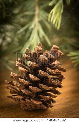 Pinecone closeup on a wooden table