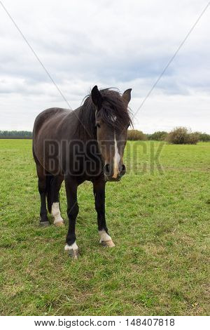 The photo shows a horse in the meadow