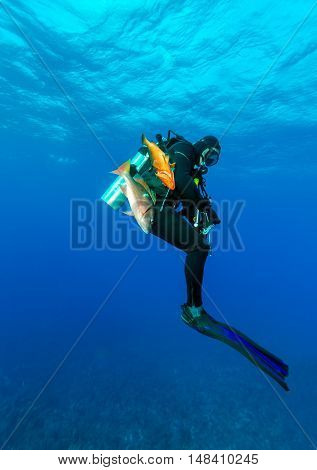 Scuba Diver With Speargun And Dead Fishes