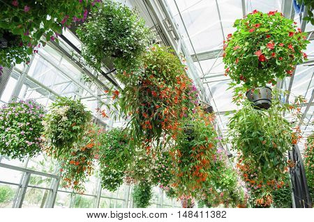 hanging flowerpots with blossom flowers in the plant
