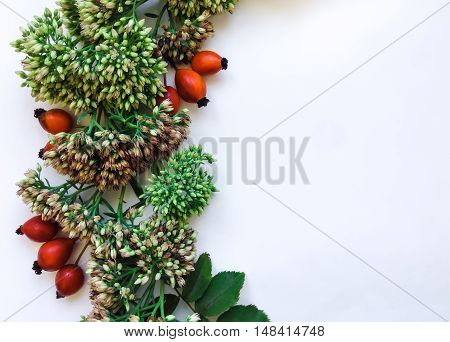 Green floral round wreath frame on white background. Flat lay top view view from above. Autumn or winter decoration