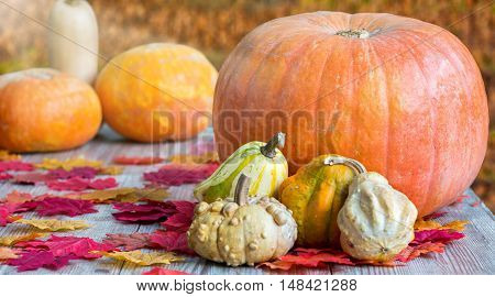 Colorful pumpkins on wooden table in warm afternoon sunlight