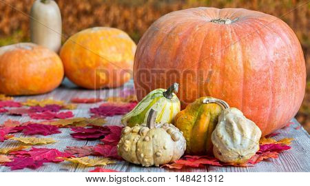 Colorful pumpkins on wooden table with autumn leafs
