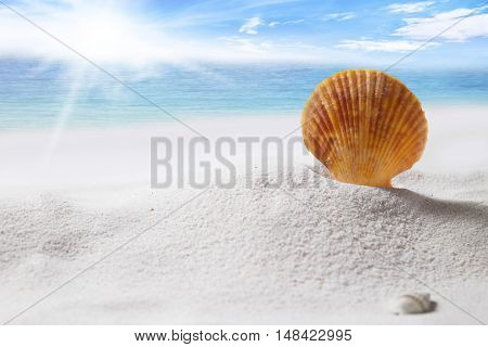 Travel and vacation on summer season background concept. Shell on sand and beach over deep blue sea and blue sky.