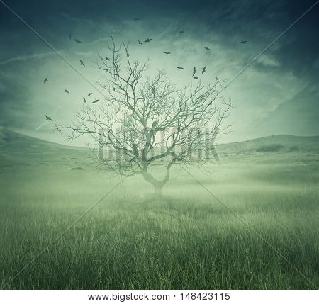 Lonely bare tree in the middle of foggy field with birds flying around. Spooky halloween screensaver