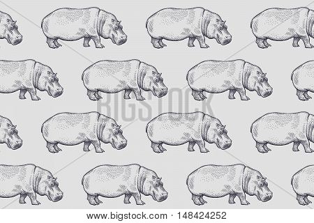 Old engraving hippopotamus. Vector illustration seamless pattern. White and black. African animals.