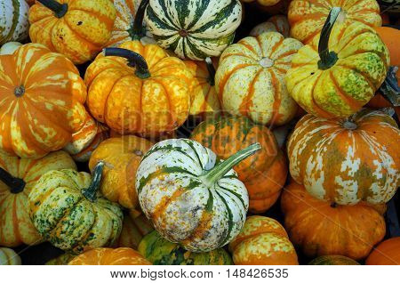Multi-color pumpkins and holiday gourds piled for market display