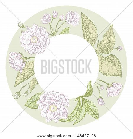 Plum flower. Vector card. Blooming branches of a tree on a white background.