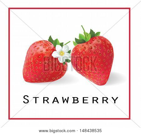 Strawberry. Vector illustration. Fresh ripe strawberries with a blossoming flower