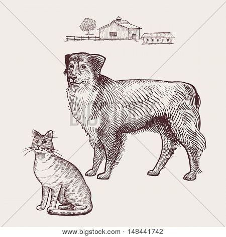 Dog and cat. Vector illustration. Isolated on white background.