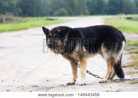 Big dog on a chain guard object