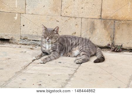 Sleeping cat on the street. brick wall