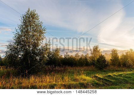landscape on the edge of the forest and meadow at dawn