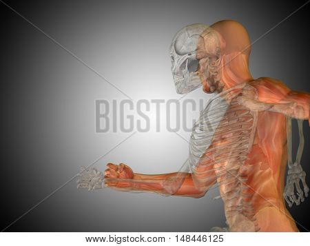 Anatomy concept or conceptual 3D illustration of human man medical or health body chest, head gray bright background