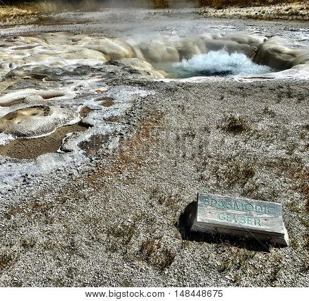 Spasmodic Geyser located on Geyser Hill in Yellowstone National Park is blue and active on a sunny summer day.