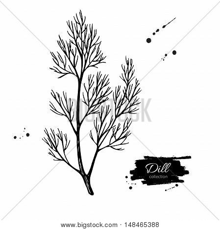 Dill vector hand drawn illustration. Isolated spice object. Engraved style seasoning. Detailed organic product sketch. Cooking flavor ingredient. Great for label, sign, icon
