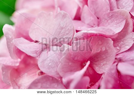 Extreme macro closeup of flowers with dewdrops after rain