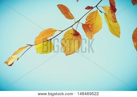 Changing Nature In Autumn