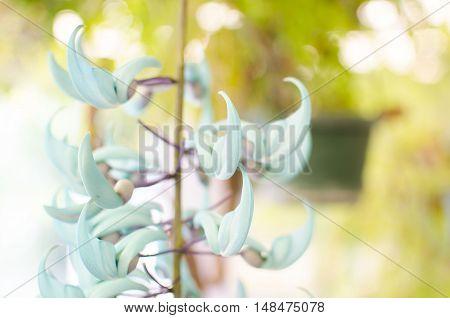 Baby blue random flower climbing plant rule of thirds