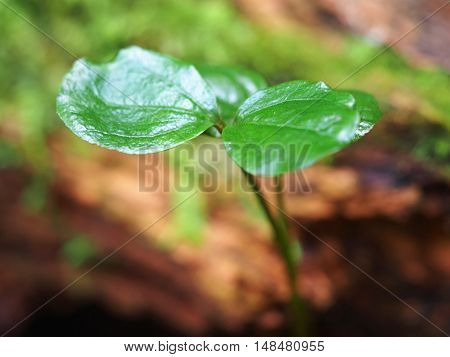 close up of green leave, select focus