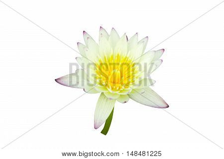 Beautiful lotus flower isolated on white background