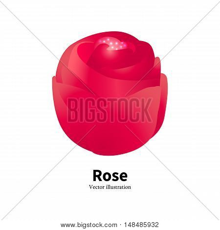 Vector illustration of a red rose bud with glowing pollen on a white background isolated. The concept of flower gardening. Logo Rose.