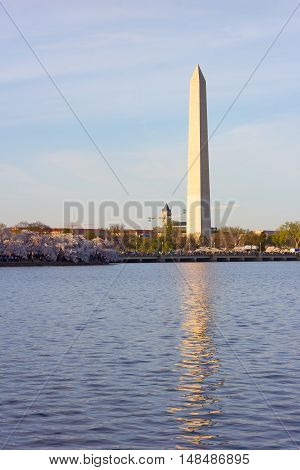 National Monument with blossoming cherry trees around Tidal Basin in Washington DC USA. The obelisk with reflection on a early spring morning.