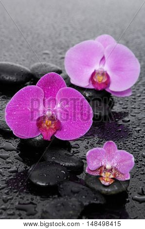 still life with pebbles and gorgeous orchid