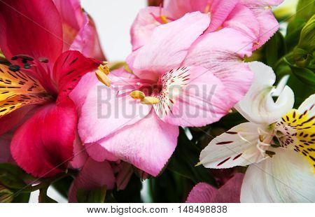 bouquet of colorful alstroemeria flowers - close up