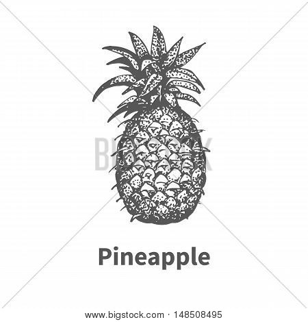 Vector illustration doodle black and white hand-drawn pineapple. Isolated on white background. The concept of harvesting. Vintage style. Fruit with the inscription.