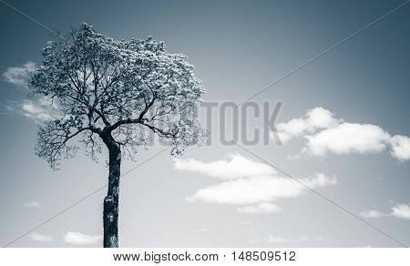 Small Tree Over Blue Sky Background