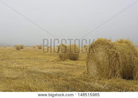 Bales of hay on a green glade