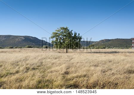 Tree in an agrarian landscape in Ciudad Real Province Spain