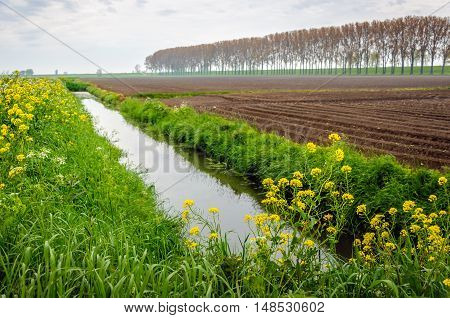 Yellow blooming rapeseed along a ditch next to a field with potato ridges.