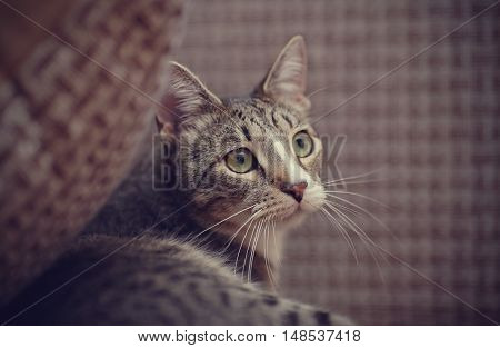 Portrait of a striped cat with white moustaches.