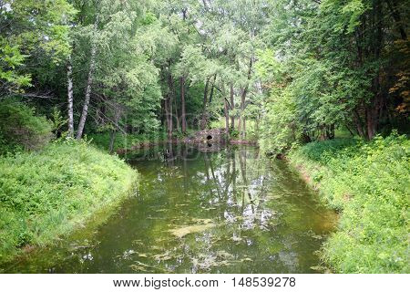 Picturesque forest area with a pond