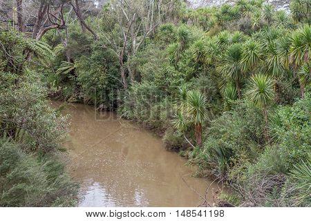 palm trees along river