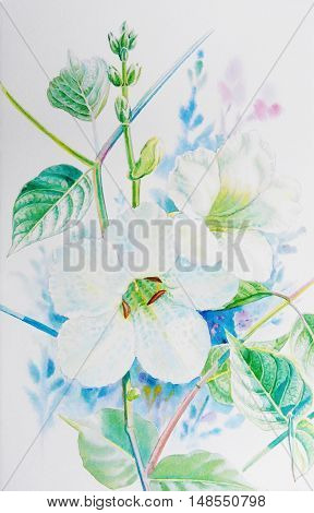 Watercolor painting original realistic white flower of acanthaceae and green leaves in white background. Original painting