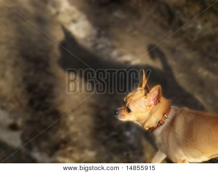 Shadow Of Chihuahua