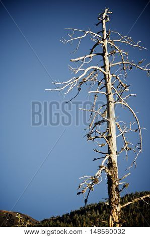 trunk of dead tree and blue sky in Pyrenees, Spain.