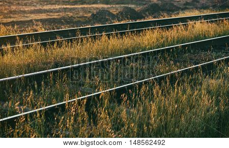 Old railroad. Old rails, overgrown with grass. Selective focus