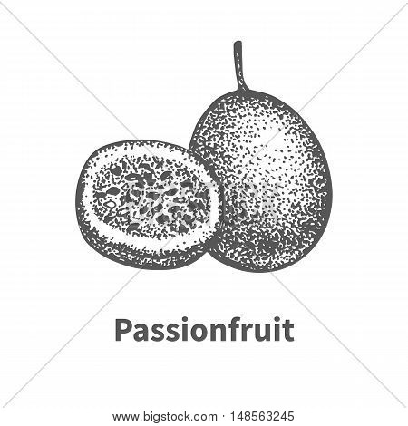 Vector illustration doodle sketch hand-drawn passionfruit. Isolated on white background. Fruit painted dots and lines. The concept of gardening and harvesting.