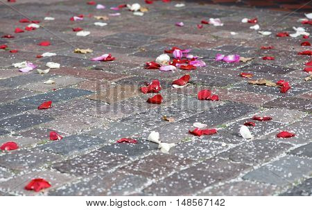 Rose petals laying at the ground after wedding ceremony. Rose petals in the street on weddings day