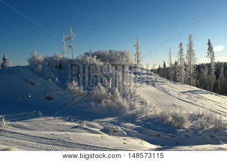 Hill with shrubs and trees covered with snow and frost. Winter. Cold.