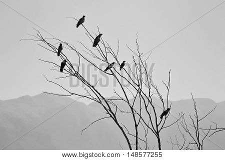 Flock of birds on tiny bare branches in black and white colors