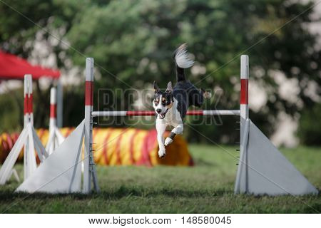Dog Hurdling Over A Jump At An Agility Event