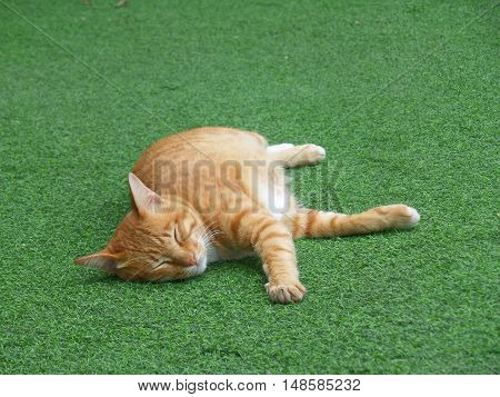 A Brown Cat Taking a Nap on the Green Grass