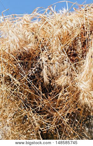 Dry Field Grass After The Storm